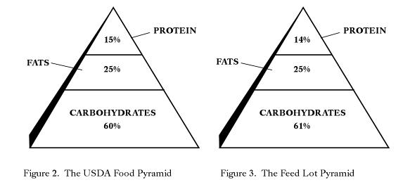 food pyramid 2011. The food pyramid has changed,